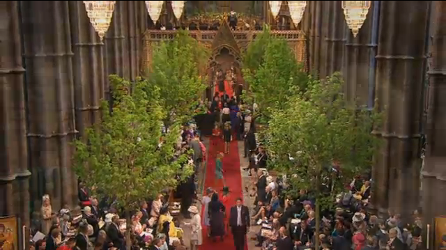 maple trees inside westminster abbey royal wedding