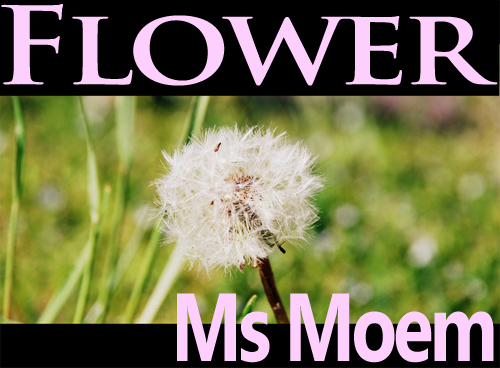Flower Poem by Ms Moem